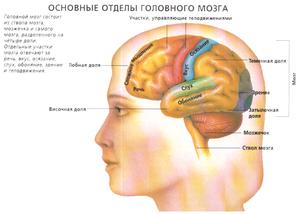 Органы чувств у человека
