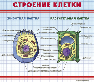 Состав живой клетки