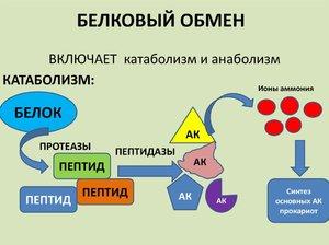 Немембранные органоиды клетки