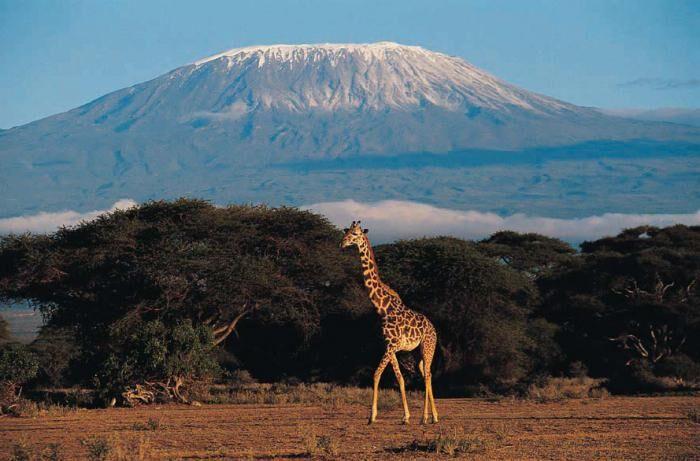 Вулкан Килиманджаро. Гора Килиманджаро в Танзании, Африка :: SYL.ru