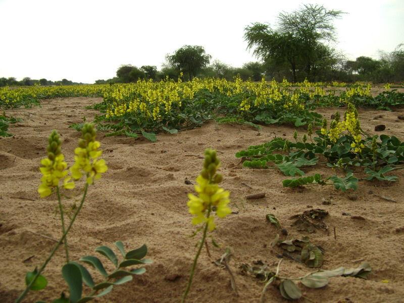 саванна почва