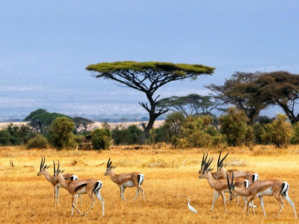 африка природные зоны (главный ключ)
