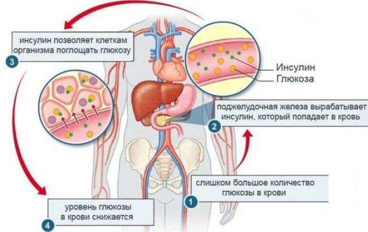Роль гормона инсулин при сахарном диабете - Estet-Portal
