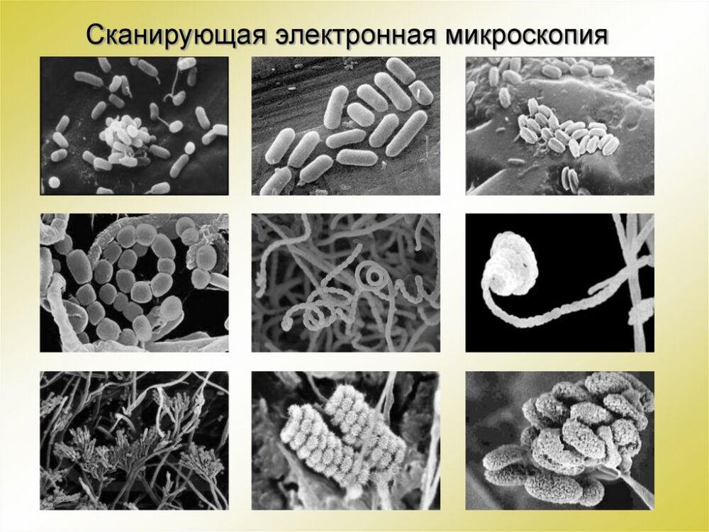функции клеточной мембраны (главный ключ)