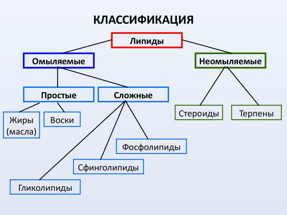 функции жиров в клетке