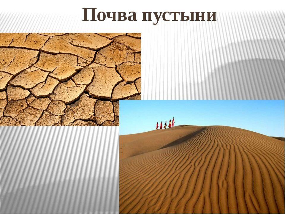 Презентация по окружающему миру на тему Пустыни 2 класс