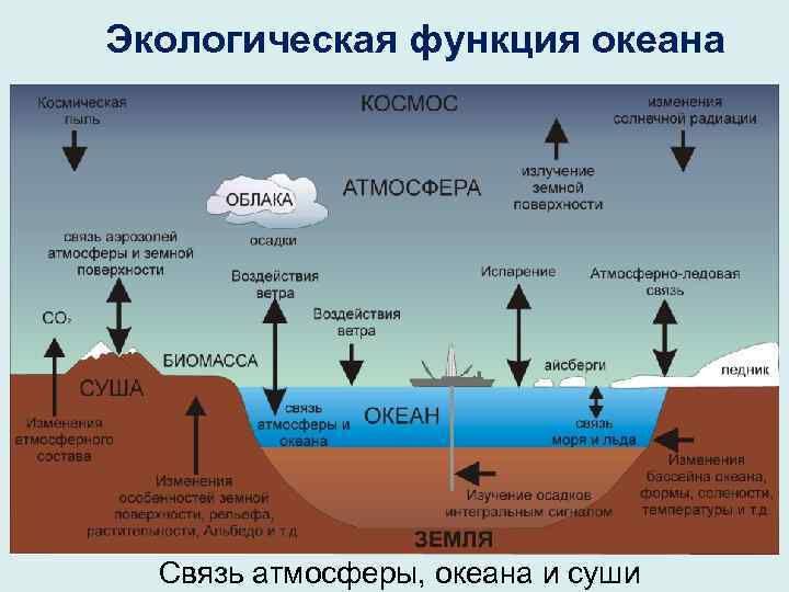 биологические богатства океана