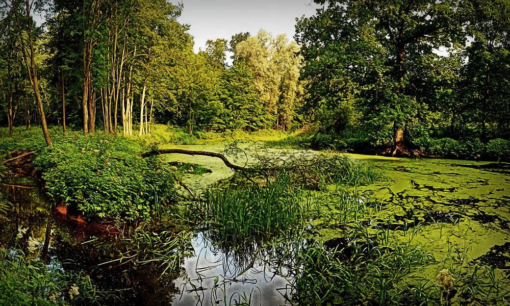 Как преодолеть водное препятствие: Переход через болото