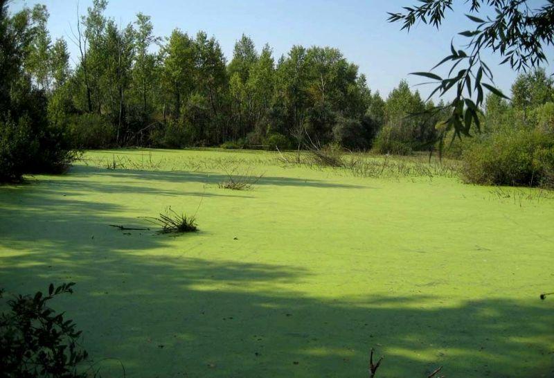 Классификация болот. Какие бывают болота Топь – это топкое болото ...