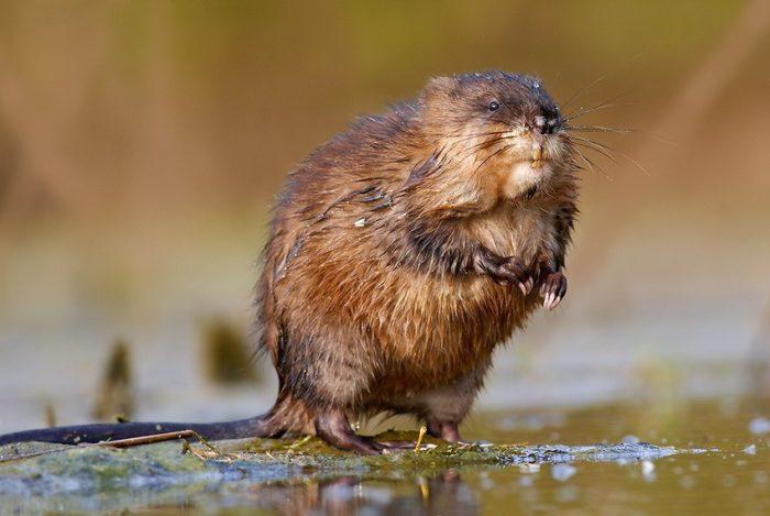 Животные которые живут на болоте