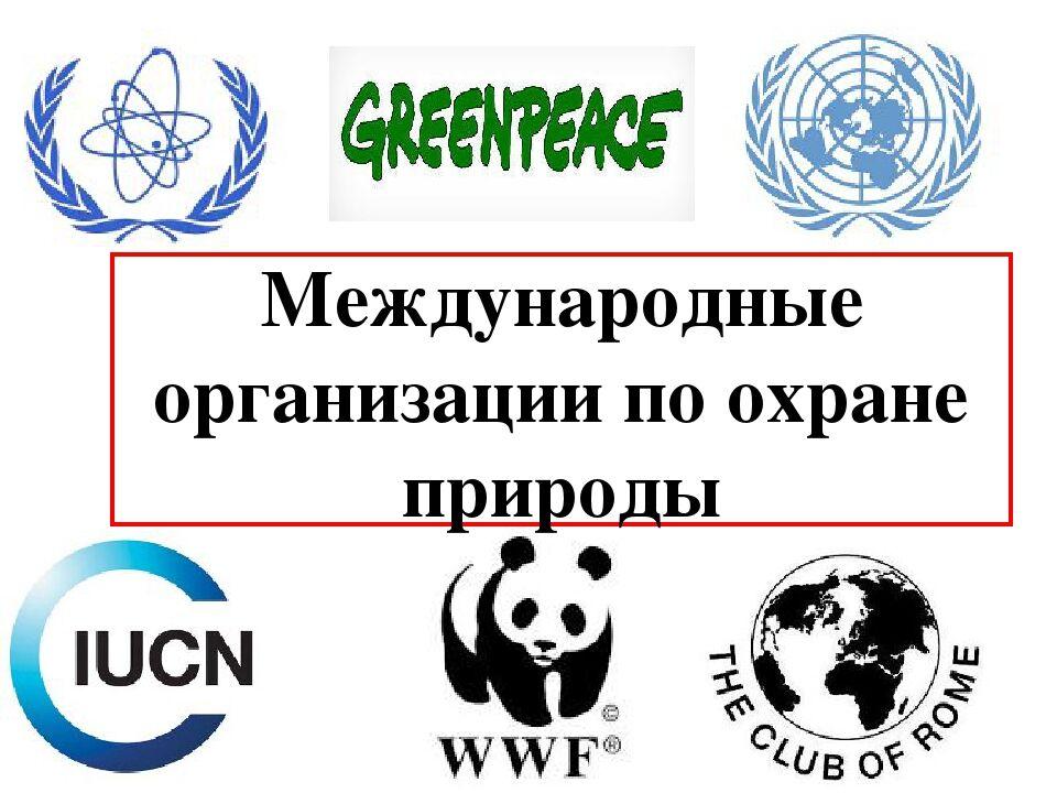 Презентация по экологии Экологические организации