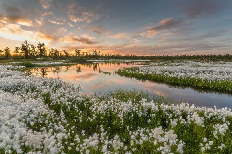 пояса и природные зоны россии (главный ключ)