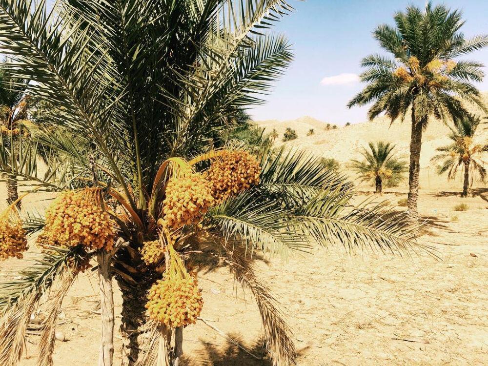 пустыня западной африки (главный ключ)