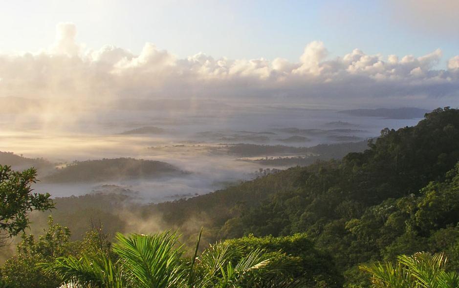 Растительность тропического пояса | Землянин
