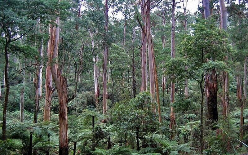 растения австралии (главный ключ)