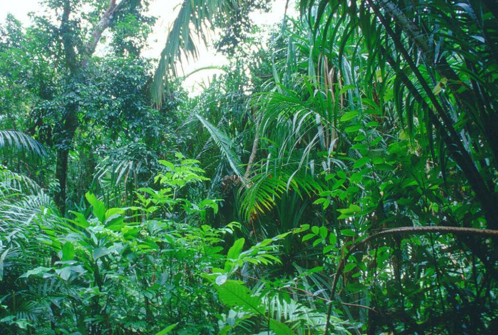 переменно влажные леса климат