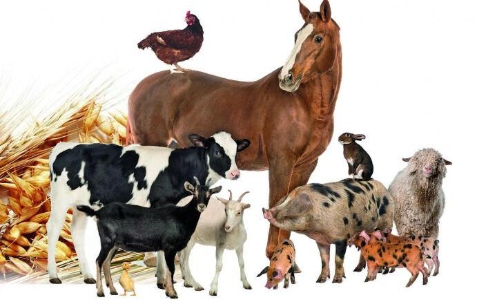 отрасли сельского хозяйства