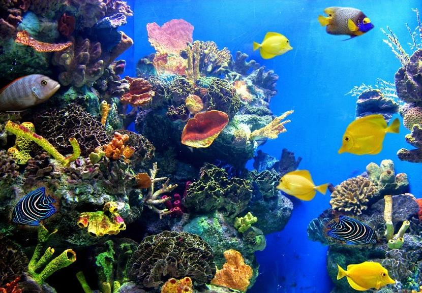 самое глубокое дно мирового океана (главный ключ)