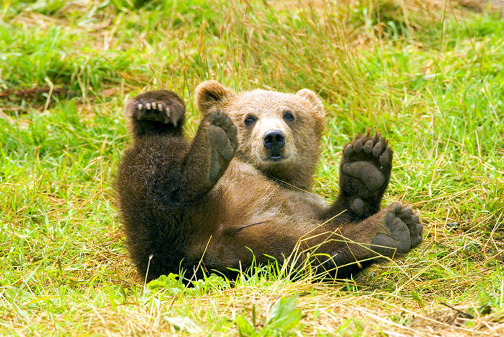 чем питается медведь в лесу