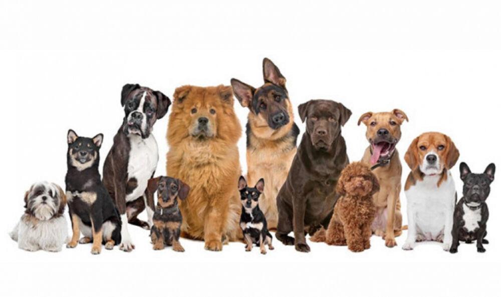 породы охотничьих собак с названиями