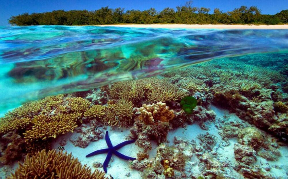 Большой Барьерный риф-курорт Австралии.   Ofir Tours