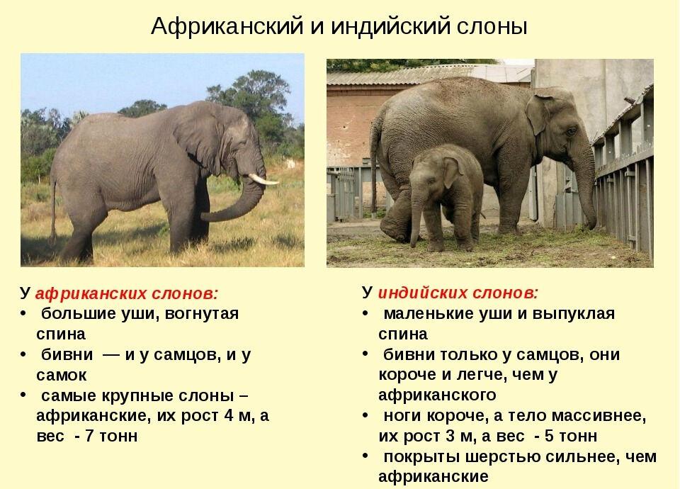 Урок по окружающему миру на тему Где живут слоны? Практическая ...