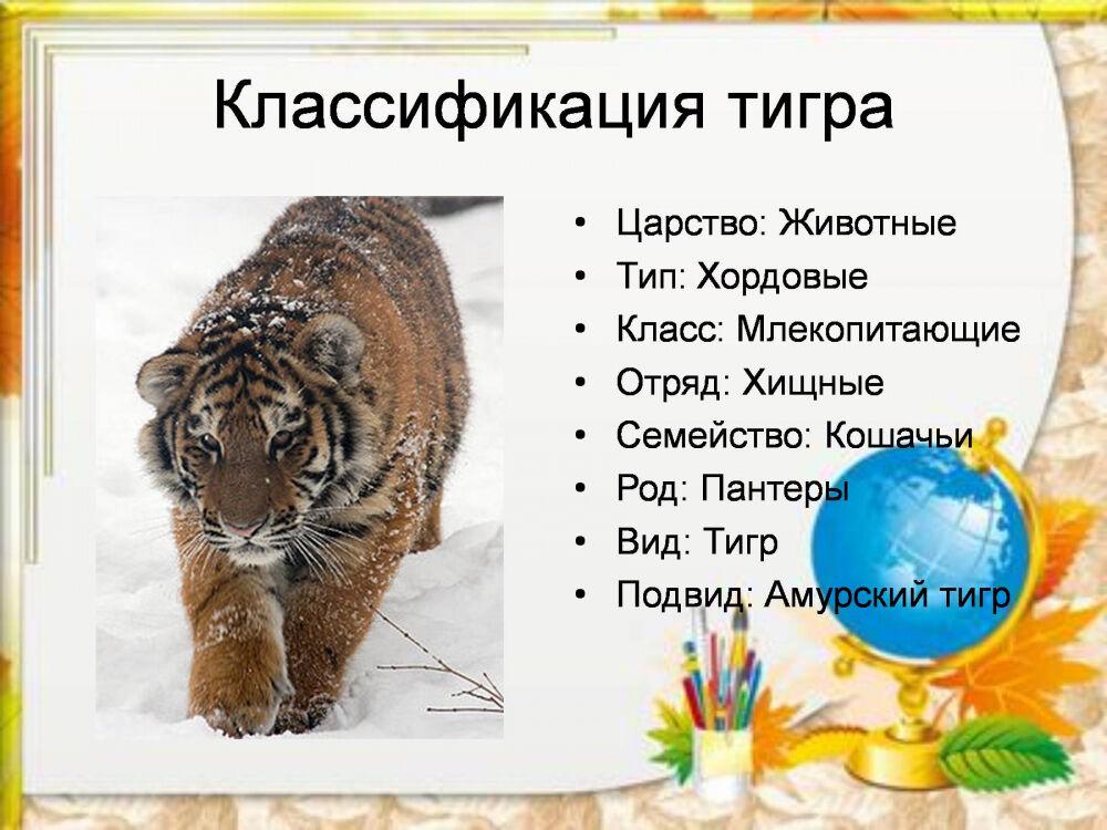 чем питается тигр