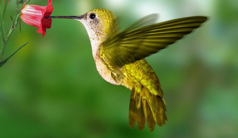 Питание колибри: рацион и потребности | ZOODOM