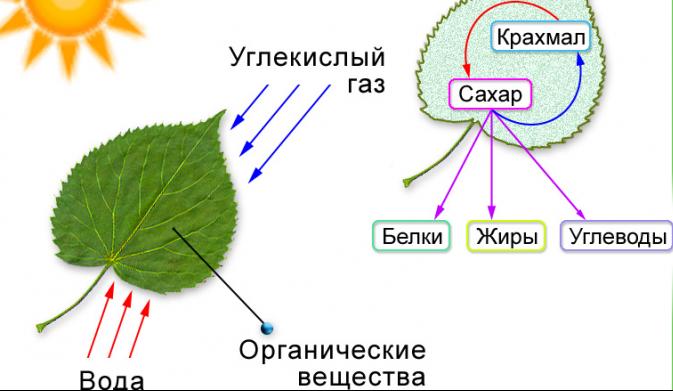 Современные виды папоротников и места их произрастания