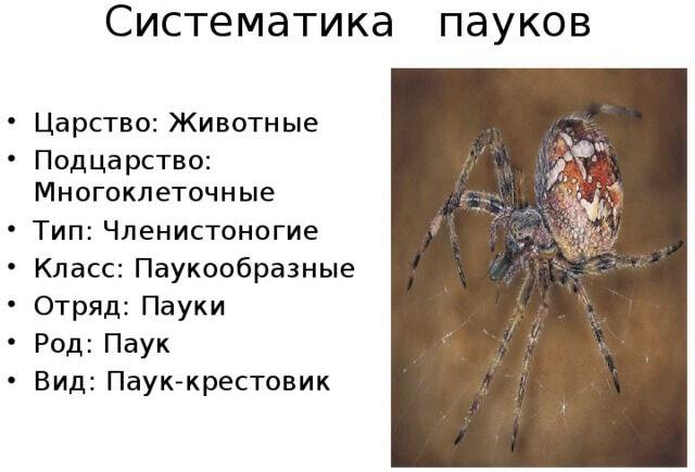 Презентация для урока Класс Паукообразные - биология, презентации
