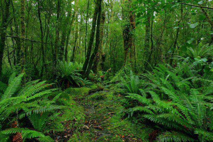 Субтропический пояс: расположение, особенности, растительный и ...
