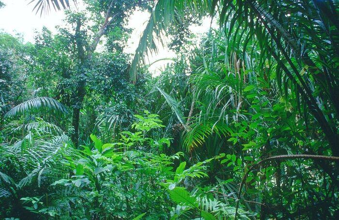 Влажные экваториальные леса Южной Америки (сельва): описание, фото ...