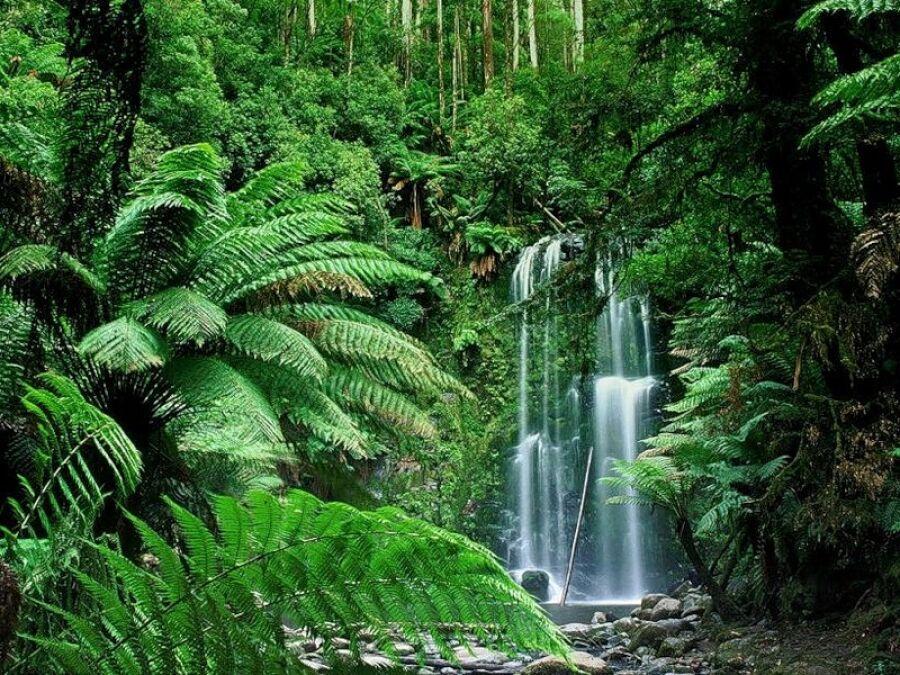 Тропические леса Индии