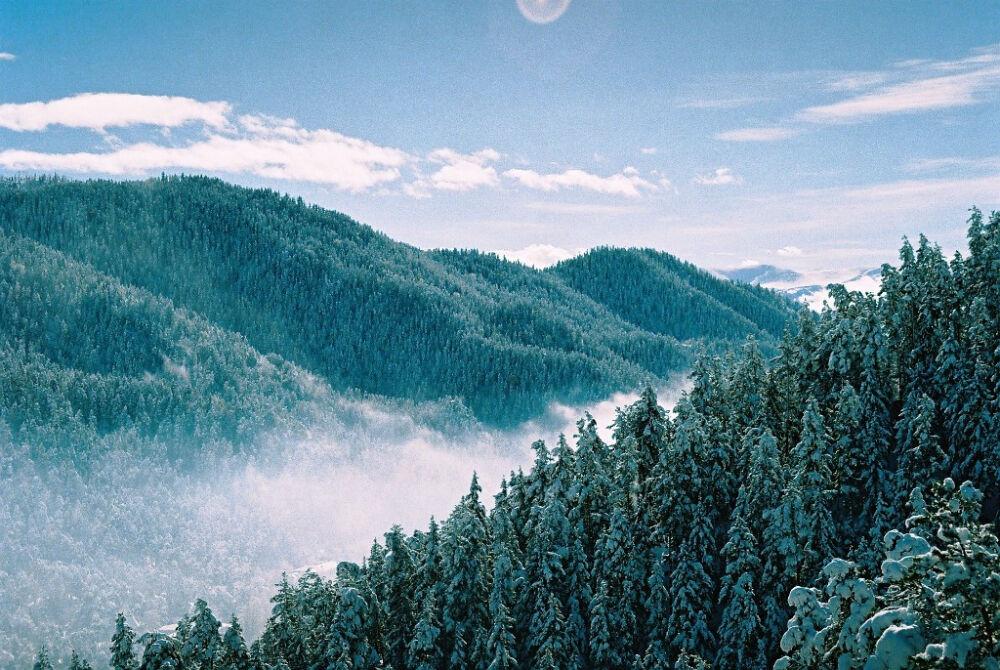 Хвойный лес — Википедия