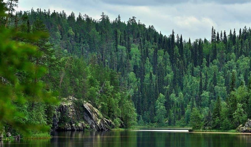 Тайга - лесные сокровища Азии | Vunderkind.Info