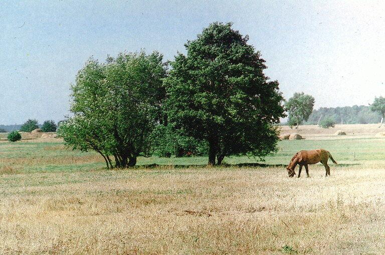 Лесостепная природная зона: характеристика, географическое положение ...