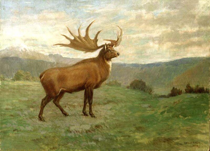 Большерогий олень — Википедия