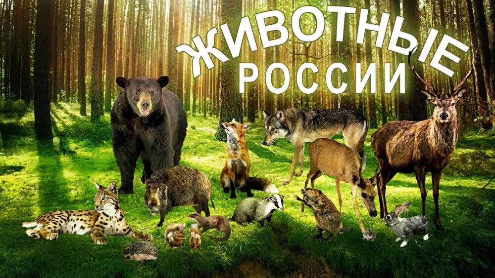 Животные России и детеныши. Развивающее видео. Познаем Мир. - YouTube