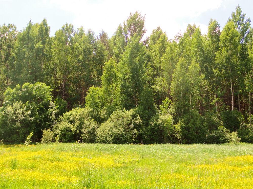 Лиственный лес — Википедия