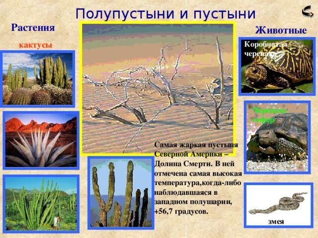 презентация по теме Природные зоны Северной Америки