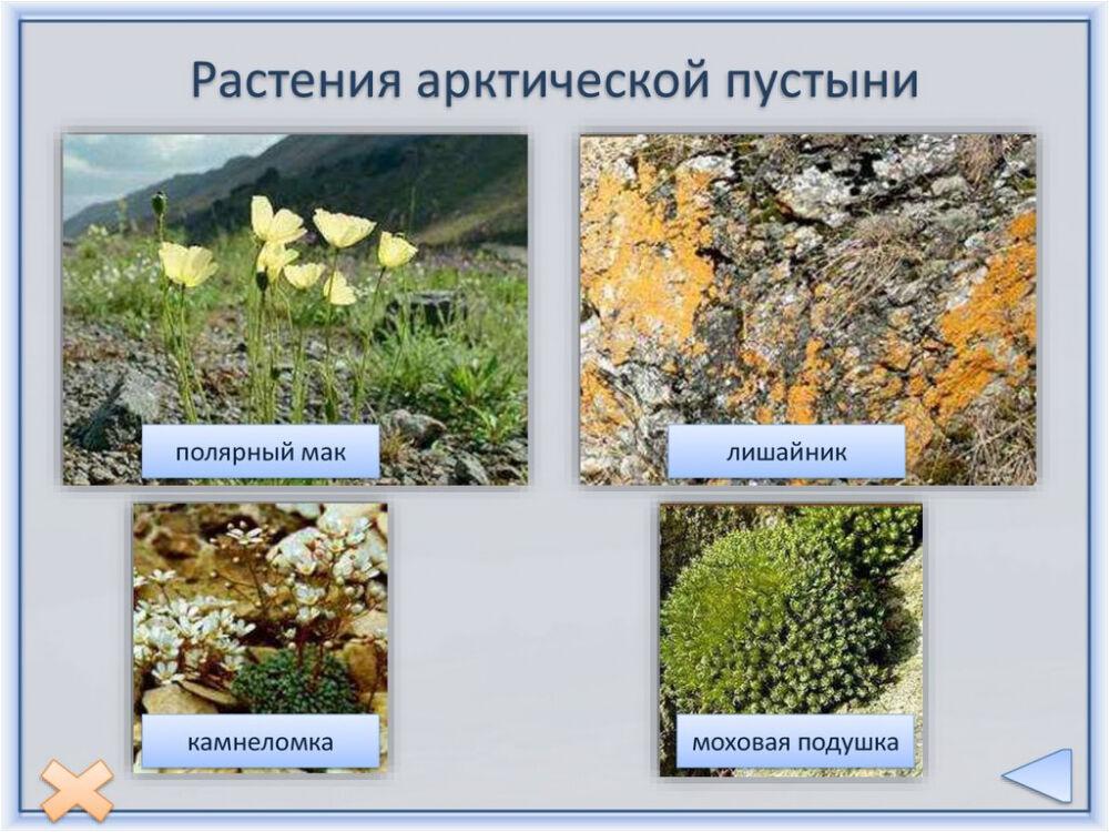 Природные зоны Северной Америки - online presentation