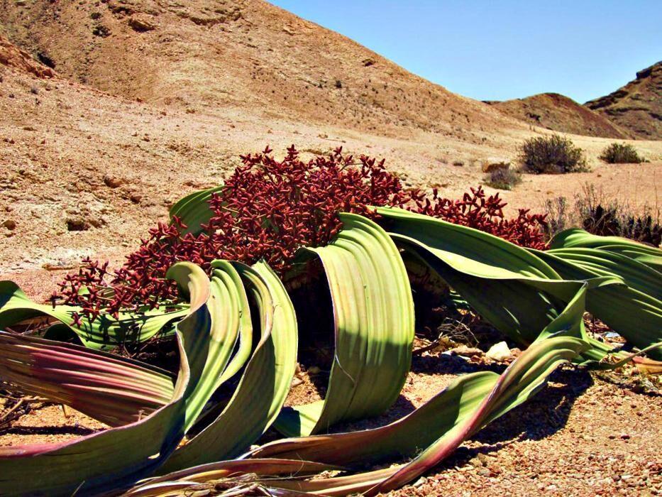 африка растения (главный ключ)