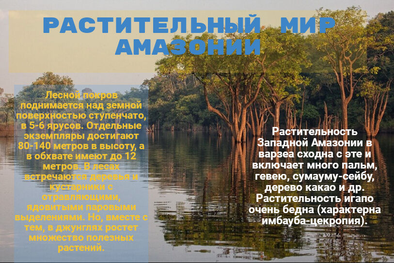 речная система амазонки