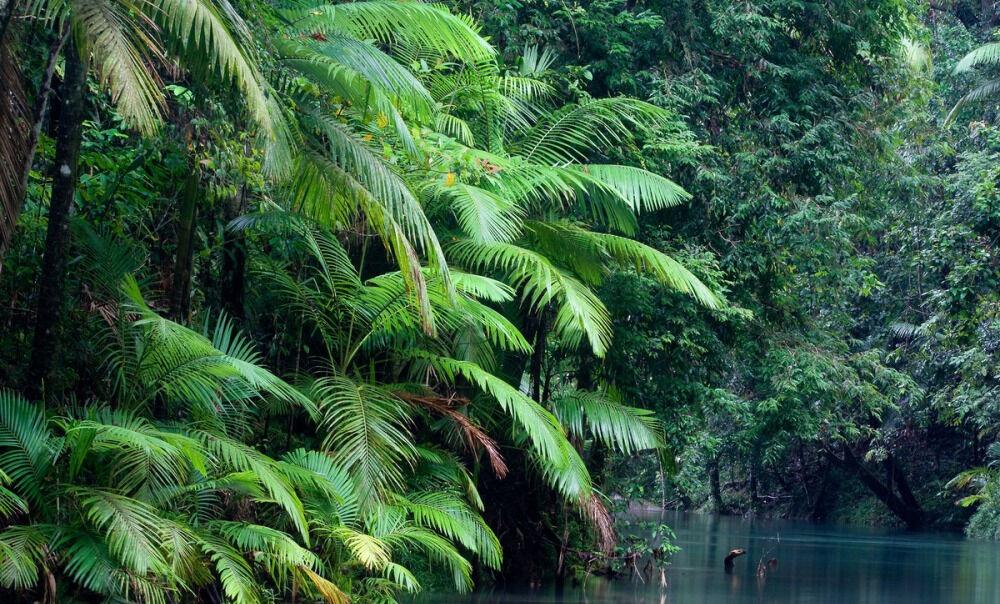 переменно влажные леса почва