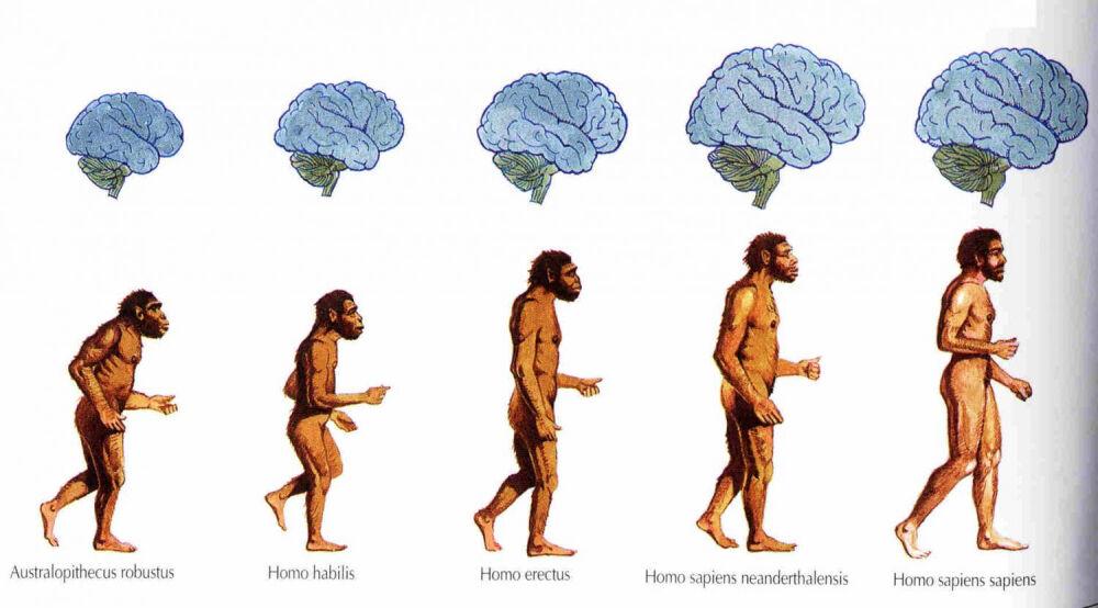 Эволюция человека продолжается | ПОСЛЕЗАВТРА