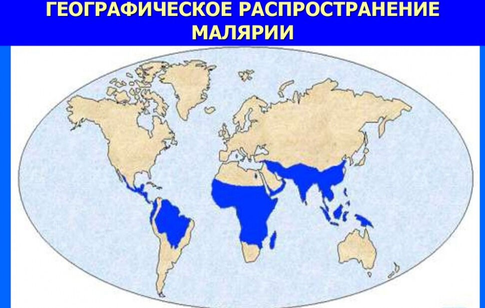 Малярия. Актуальность проблемы малярии - презентация онлайн