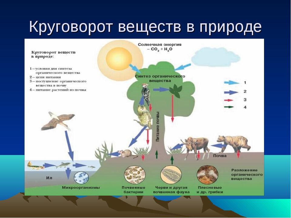 схема живой и неживой природы