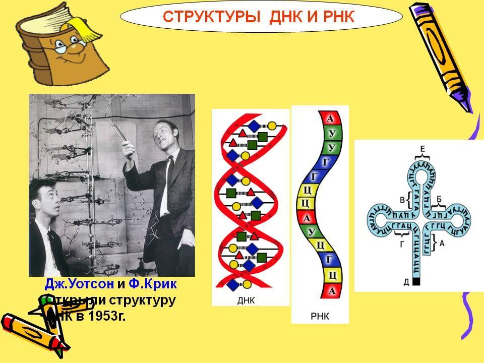 наследование биология