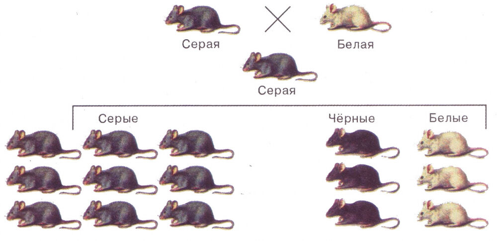 альтернативные признаки в генетике