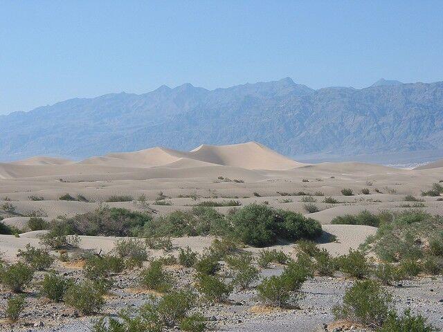Природная зона полупустынь: характеристика, географическое положение ...